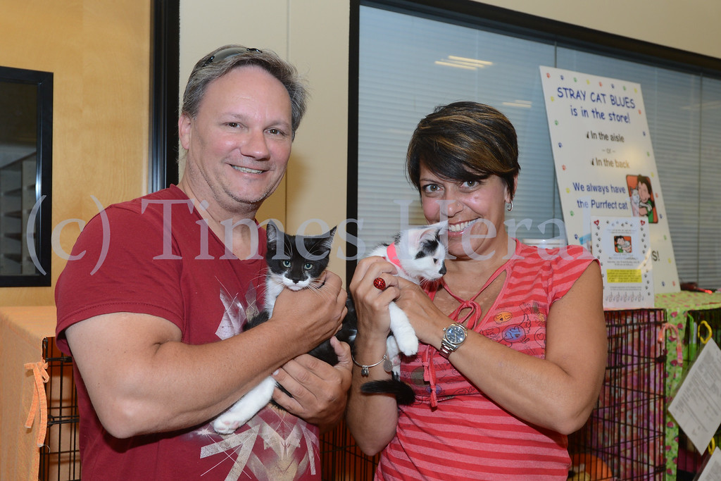 Description of . Stray Cat Blues has a number of kittens available for adoption at the Petsmart in Upper Providence.  Saturday, July 5, 2014.  Photo by Adrianna Hoff/Times Herald Staff.