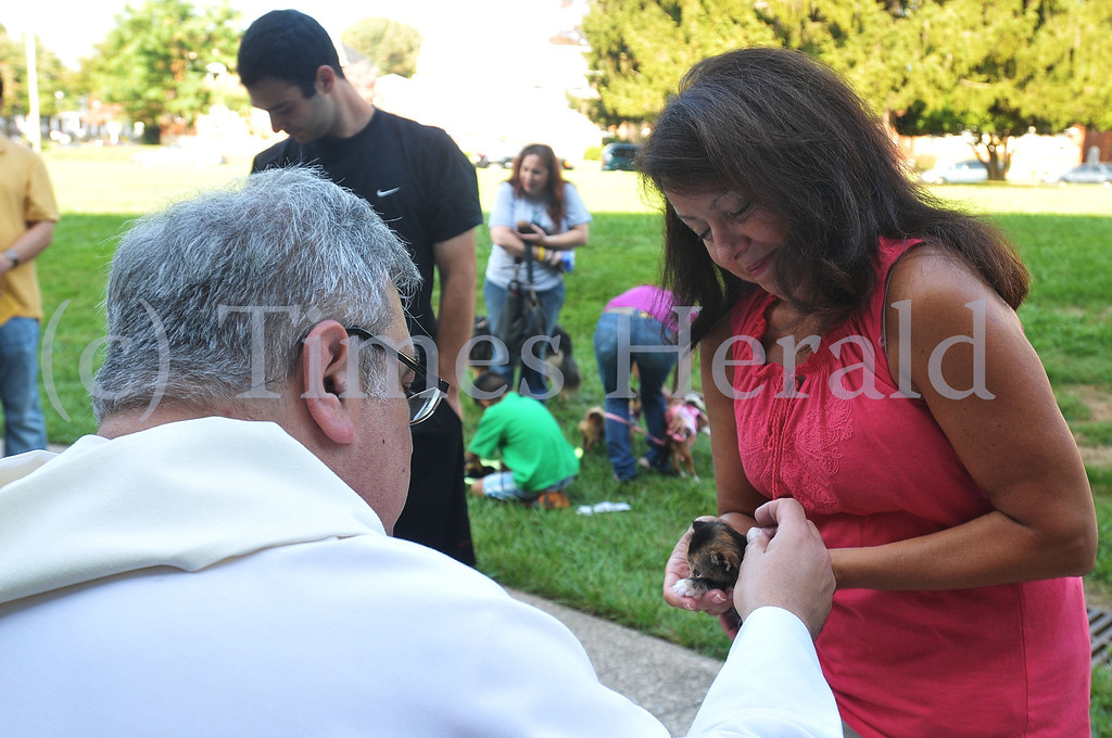 Description of . Father Jim Goerner blesses Autumn, a 5 week old kitten, as her owner Sandy Milito holds her.  Saturday, October 5, 2013.  Photo by Adrianna Hoff/Times Herald Staff.