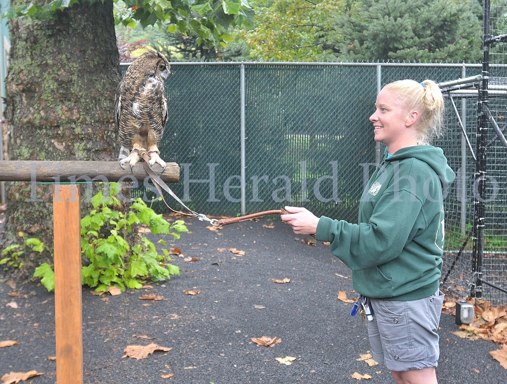 Description of . Stella, a Great Horned Owl perches close to Zoo Educator Elizabeth Yerger.  Wednesday, August 28, 2013.  Photo by Adrianna Hoff/Times Herald Staff.