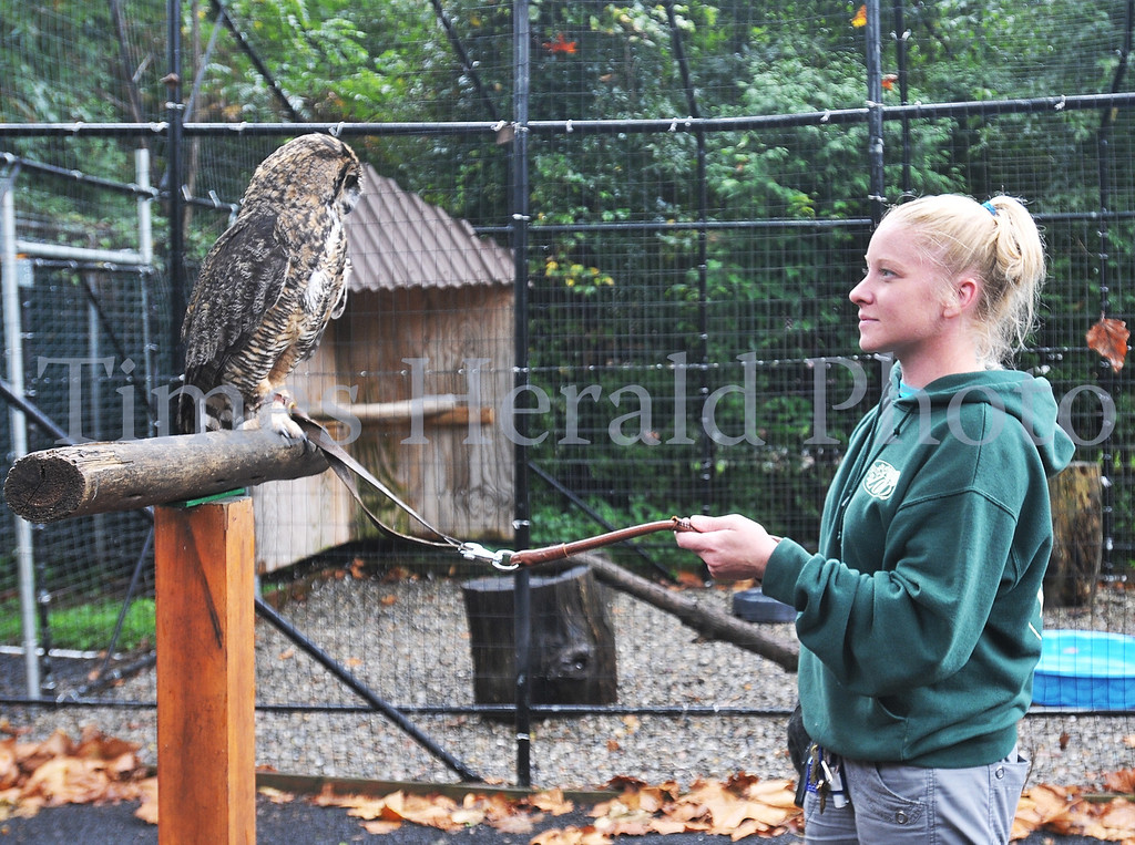 Description of . Stella the new mascot for the Temple Owls looks over at Zoo Educator Elizabeth Yerger at the Elmwood Park Zoo.  Wednesday, August 28, 2013.  Photo by Adrianna Hoff/Times Herald Staff.
