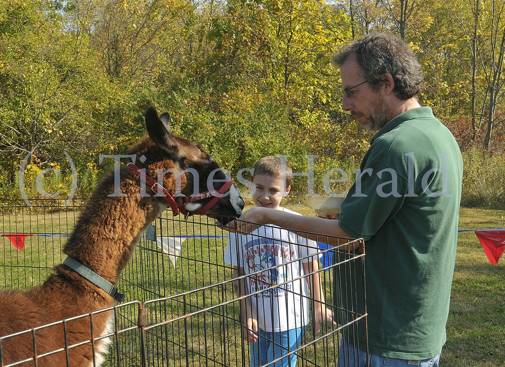 Description of . Joe and Alex Stever feed Pedro the Llama at the petting zoo of the Lower Providence Fall Festival.  Saturday, October 5, 2013.  Photo by Adrianna Hoff/Times Herald Staff.